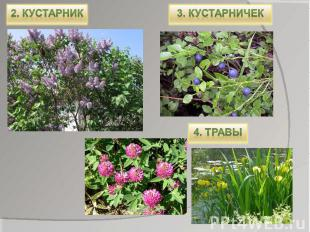 2. кустарник3. кустарничек4. травы