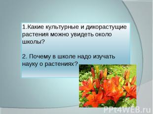 1.Какие культурные и дикорастущие растения можно увидеть около школы?2. Почему в