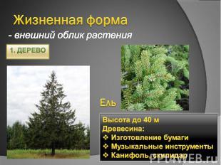 Жизненная форма - внешний облик растенияВысота до 40 мДревесина: Изготовление бу