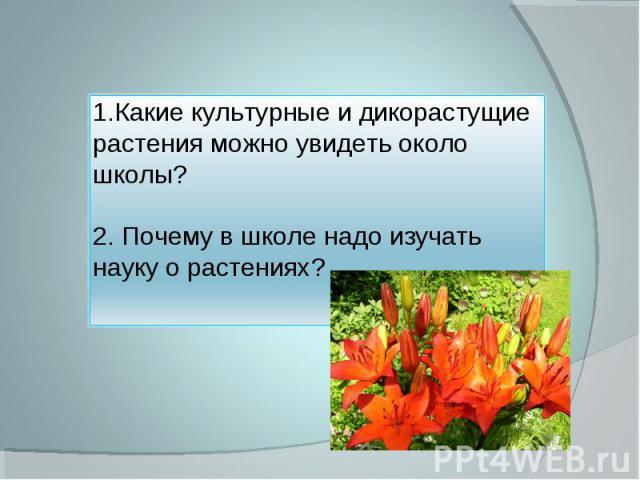 1.Какие культурные и дикорастущие растения можно увидеть около школы?2. Почему в школе надо изучать науку о растениях?