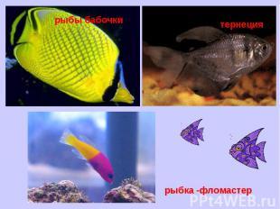 рыбы бабочкитернециярыбка -фломастер