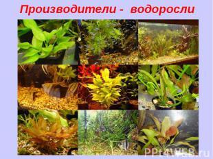 Производители - водоросли