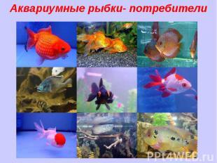 Аквариумные рыбки- потребители