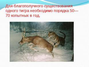 Для благополучного существования одного тигра необходимо порядка 50—70 копытных