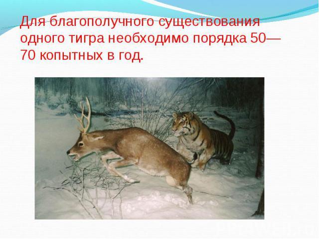 Для благополучного существования одного тигра необходимо порядка 50—70 копытных в год.
