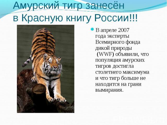 Амурский тигр занесён вКрасную книгу России!!!В апреле 2007 годаэксперты Всемирного фонда дикой природы (WWF) объявили, что популяция амурских тигров достигла столетнего максимума и что тигр больше не находится на грани вымирания.