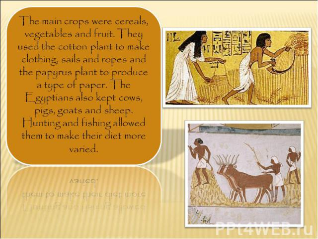 The main crops were cereals, vegetables and fruit. They used the cotton plant to make clothing, sails and ropes and the papyrus plant to produce a type of paper. The Egyptians also kept cows, pigs, goats and sheep. Hunting and fishing allowed them t…