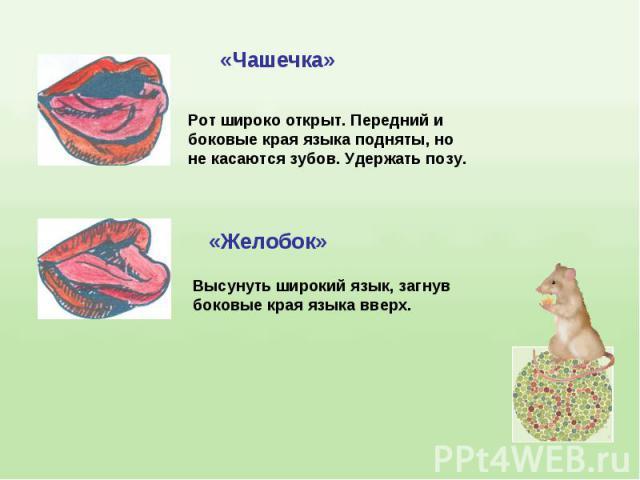 Рот широко открыт. Передний и боковые края языка подняты, но не касаются зубов. Удержать позу.Высунуть широкий язык, загнувбоковые края языка вверх.