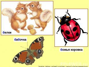 белкибабочкабожья коровка