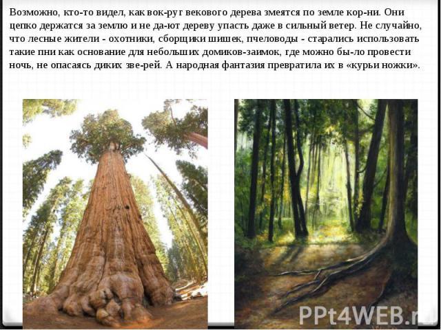 Возможно, кто-то видел, как вокруг векового дерева змеятся по земле корни. Они цепко держатся за землю и не дают дереву упасть даже в сильный ветер. Не случайно, что лесные жители - охотники, сборщики шишек, пчеловоды - старались использовать такие …