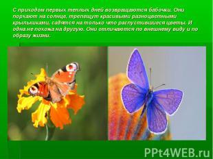 С приходом первых теплых дней возвращаются бабочки. Они порхают на солнце, трепе