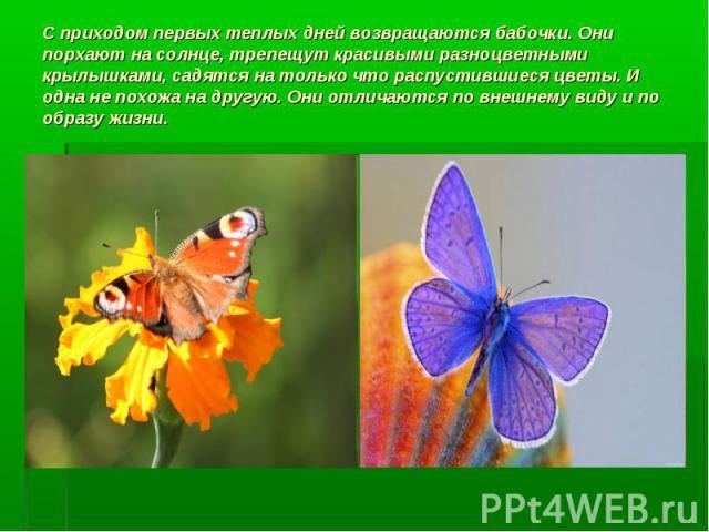С приходом первых теплых дней возвращаются бабочки. Они порхают на солнце, трепещут красивыми разноцветными крылышками, садятся на только что распустившиеся цветы. И одна не похожа на другую. Они отличаются по внешнему виду и по образу жизни.