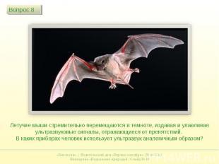 Летучие мыши стремительно перемещаются в темноте, издавая и улавливая ультразвук