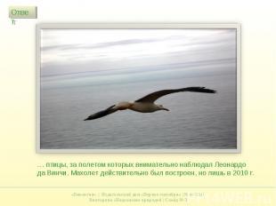 … птицы, за полетом которых внимательно наблюдал Леонардо да Винчи. Махолет дейс