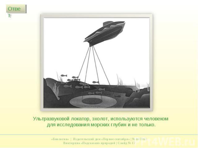 Ультразвуковой локатор, эхолот, используются человеком для исследования морских глубин и не только.