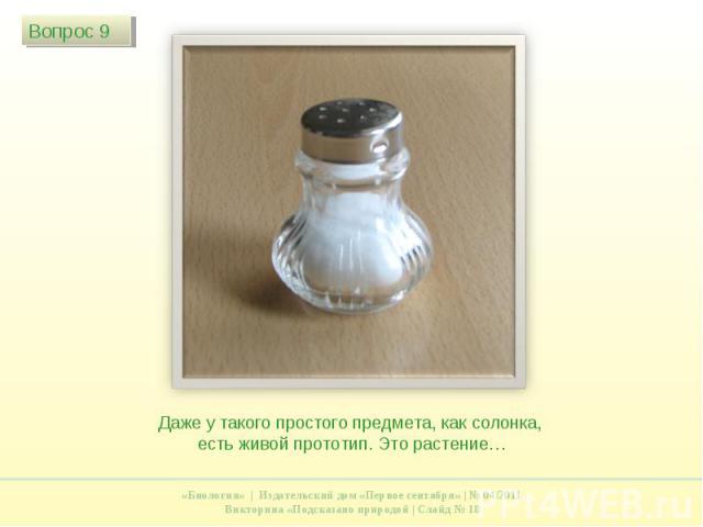 Даже у такого простого предмета, как солонка, есть живой прототип. Это растение…