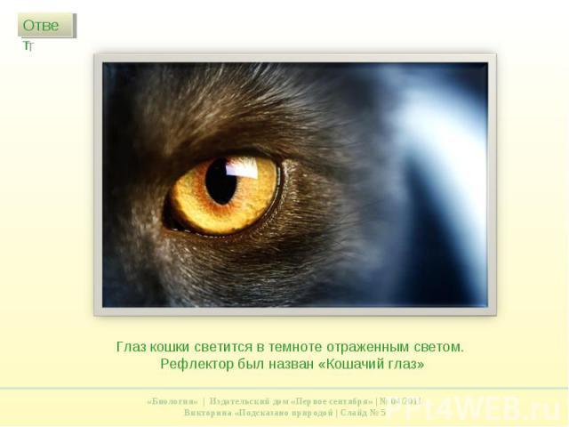 Глаз кошки светится в темноте отраженным светом. Рефлектор был назван «Кошачий глаз»