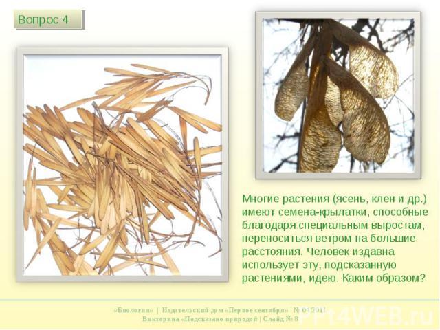 Многие растения (ясень, клен и др.) имеют семена-крылатки, способные благодаря специальным выростам, переноситься ветром на большие расстояния. Человек издавна использует эту, подсказанную растениями, идею. Каким образом?