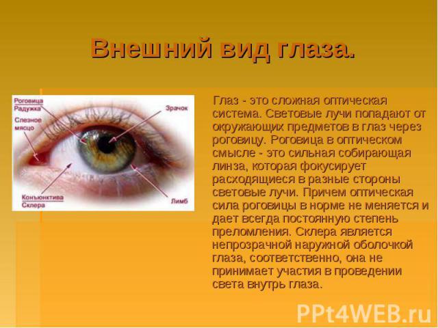 Внешний вид глаза. Глаз - это сложная оптическая система. Световые лучи попадают от окружающих предметов в глаз через роговицу. Роговица в оптическом смысле - это сильная собирающая линза, которая фокусирует расходящиеся в разные стороны световые лу…