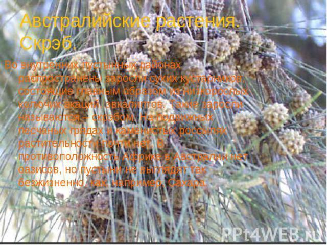 Австралийские растения. Скрэб.Во внутренних пустынных районах распространены заросли сухих кустарников, состоящие главным образом из низкорослых колючих акаций, эвкалиптов. Такие заросли называются – скрэбом. На подвижных песчаных грядах и каменисты…