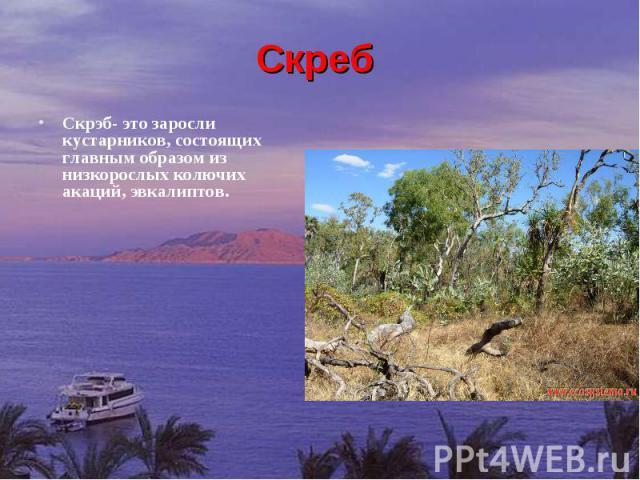 Скреб Скрэб- это заросли кустарников, состоящих главным образом из низкорослых колючих акаций, эвкалиптов.