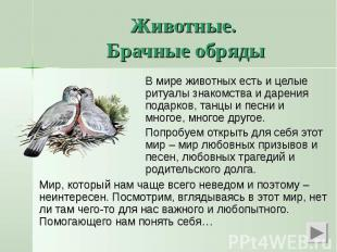 Животные. Брачные обрядыВ мире животных есть и целые ритуалы знакомства и дарени