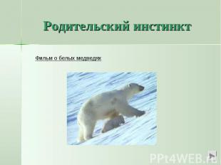 Родительский инстинктФильм о белых медведях