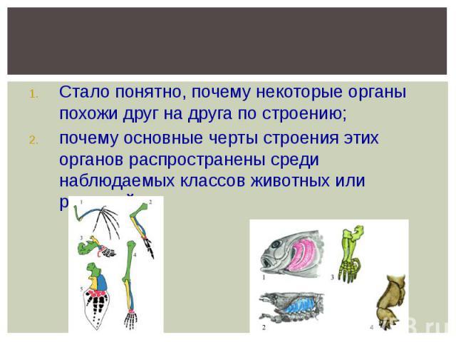 Стало понятно, почему некоторые органы похожи друг на друга по строению; почему основные черты строения этих органов распространены среди наблюдаемых классов животных или растений…