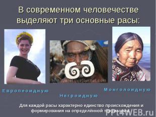 В современном человечестве выделяют три основные расы:Для каждой расы характерно