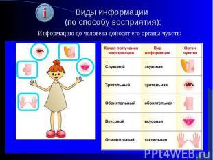 Виды информации (по способу восприятия):Информацию до человека доносят его орган