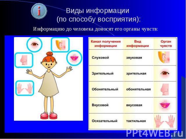 Виды информации (по способу восприятия):Информацию до человека доносят его органы чувств: