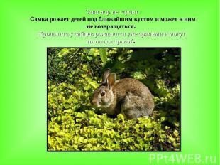 Заяц нор не строит Самка рожает детей под ближайшим кустом и может к ним не возв