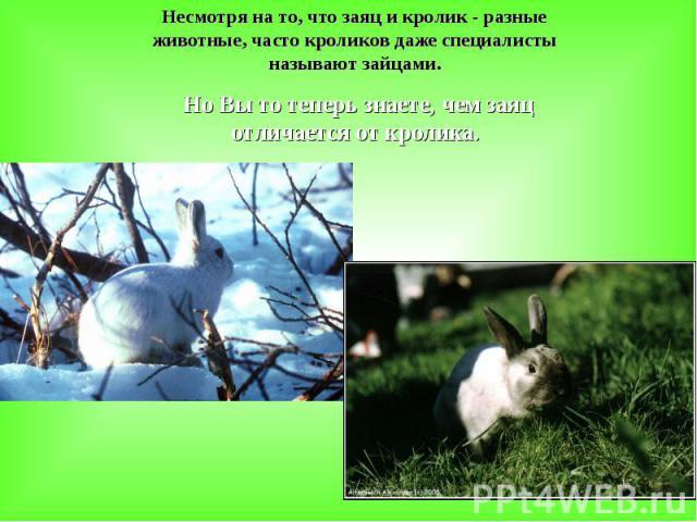 Несмотря на то, что заяц и кролик - разные животные, часто кроликов даже специалисты называют зайцами. Но Вы то теперь знаете, чем заяц отличается от кролика.