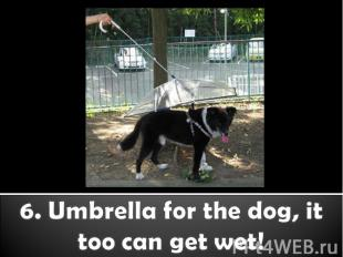 6. Umbrella for the dog, it too can get wet!