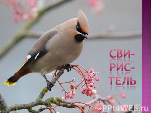СВИ-РИС-ТЕЛь