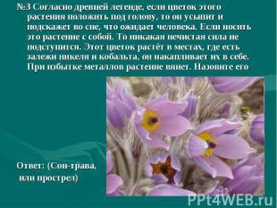 №3 Согласно древней легенде, если цветок этого растения положить под голову, то