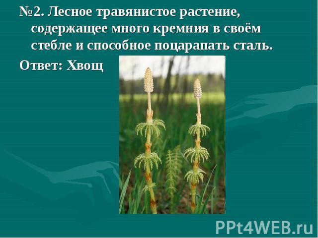 №2. Лесное травянистое растение, содержащее много кремния в своём стебле и способное поцарапать сталь.Ответ: Хвощ