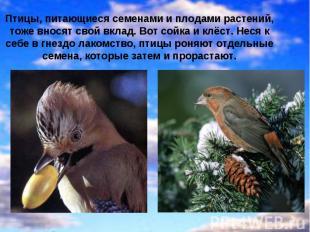 Птицы, питающиеся семенами и плодами растений, тоже вносят свой вклад. Вот сойка