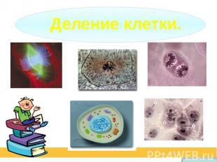 Деление клетки.