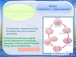 митоз («митос» - нить)Мейоз («мейозис» - уменьшение)Это деление, характерное для