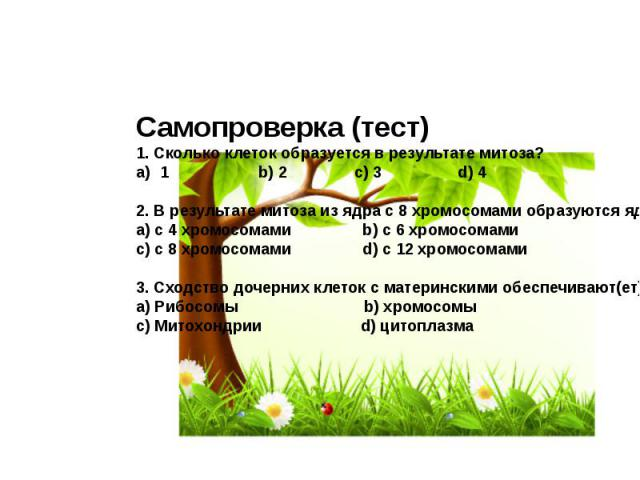 Самопроверка (тест) 1. Сколько клеток образуется в результате митоза?1 b) 2 c) 3 d) 42. В результате митоза из ядра с 8 хромосомами образуются ядра:a) с 4 хромосомами b) с 6 хромосомамиc) с 8 хромосомами d) с 12 хромосомами3. Сходство дочерних клето…
