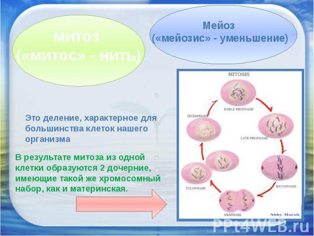 митоз («митос» - нить)Мейоз («мейозис» - уменьшение)Это деление, характерное для большинства клеток нашего организмаВ результате митоза из одной клетки образуются 2 дочерние, имеющие такой же хромосомный набор, как и материнская.