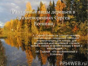 Различные виды деревьев в стихотворениях Сергея Есенина «..Сергей Есенин не стол