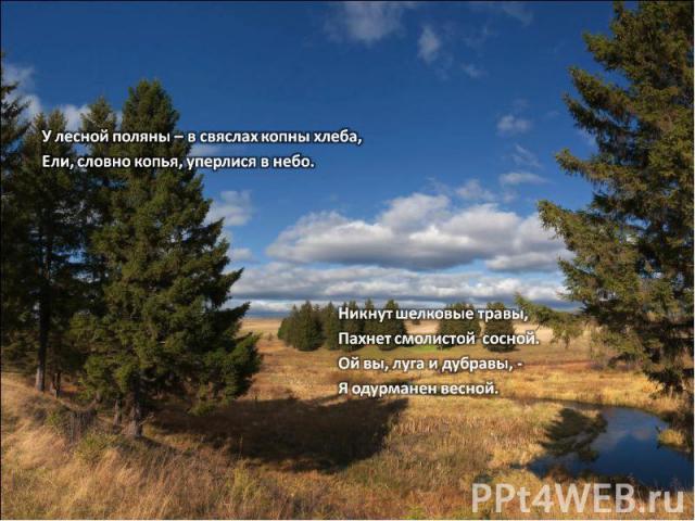 У лесной поляны – в свяслах копны хлеба,Ели, словно копья, уперлися в небо.Никнут шелковые травы,Пахнет смолистой сосной.Ой вы, луга и дубравы, - Я одурманен весной.