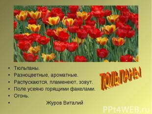 ТЮЛЬПАНЫТюльпаны.Разноцветные, ароматные.Распускаются, пламенеют, зовут.Поле усе