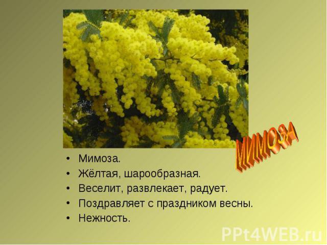 МИМОЗАМимоза.Жёлтая, шарообразная.Веселит, развлекает, радует.Поздравляет с праздником весны.Нежность.