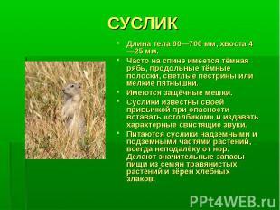 СУСЛИКДлина тела 60—700 мм, хвоста 4—25 мм. Часто на спине имеется тёмная рябь,