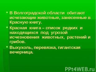 В Волгоградской области обитают исчезающие животные, занесенные в Красную книгу.