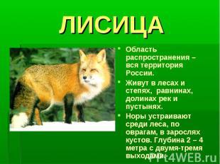 ЛИСИЦАОбласть распространения – вся территория России.Живут в лесах и степях, ра