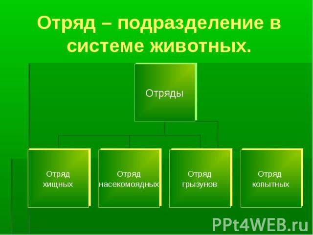 Отряд – подразделение в системе животных.